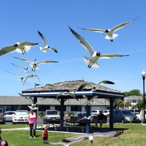 Seagulls in flight at Southport, NC. Photo By Kevin Carter